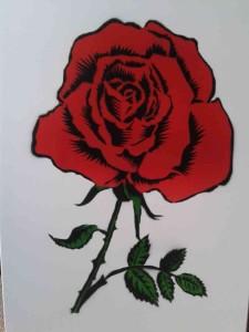róża w kolorze